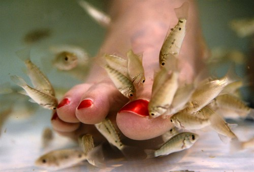 Fish Treatment